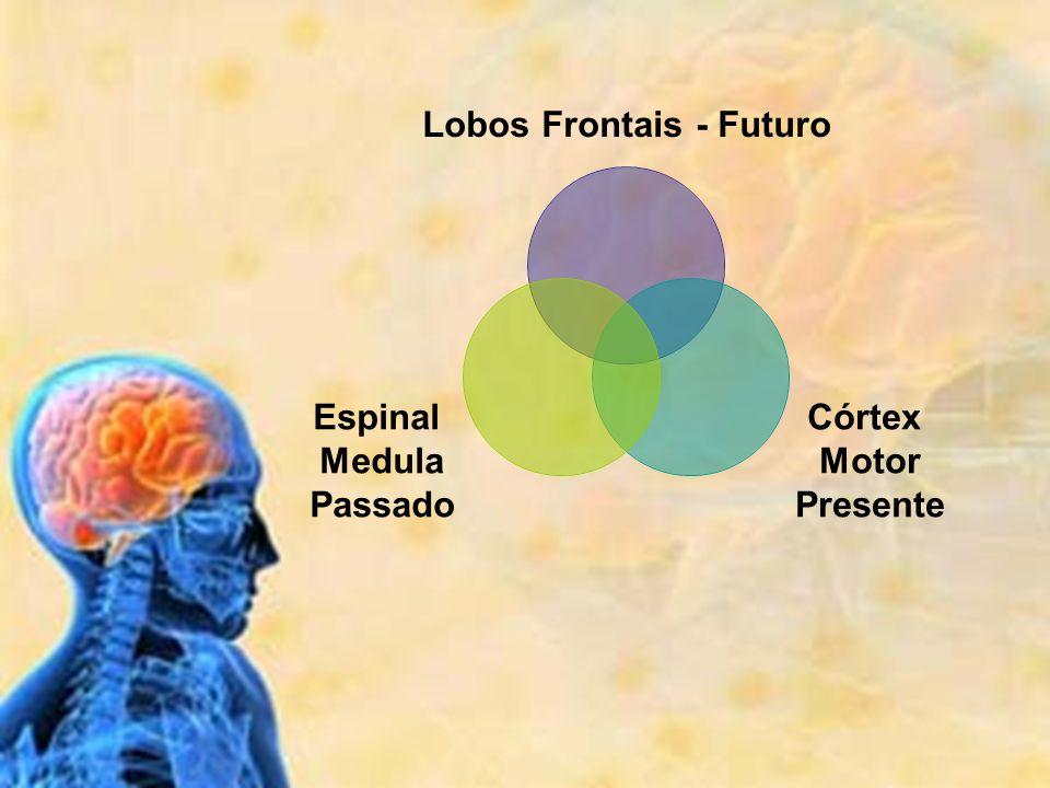 Lobos Frontais - Futuro Córtex Motor Presente Espinal Medula Passado