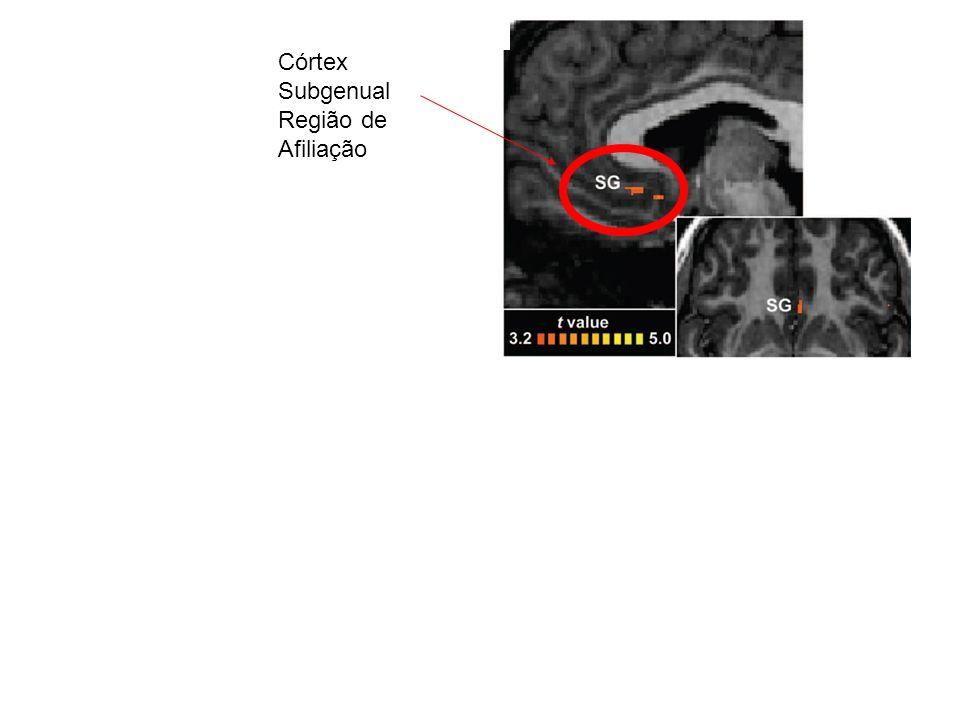 Sistema de Recompensa Mesolímbico Striatal Córtex Subgenual Região de Afiliação