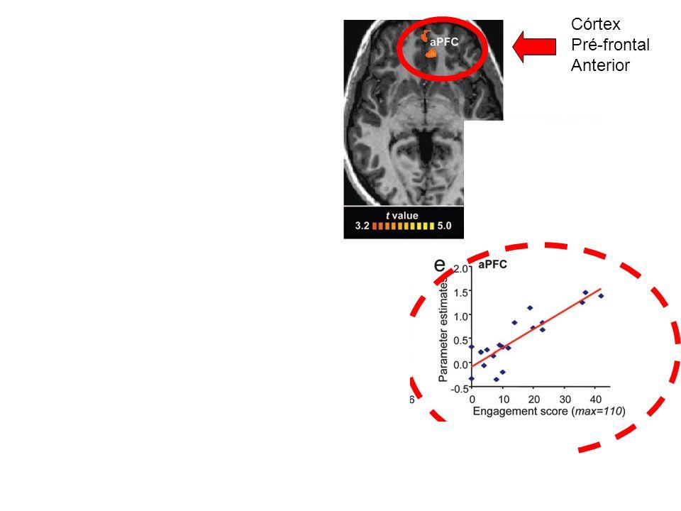 Córtex Pré-frontal Anterior Córtex Orbitofrontal Lateral