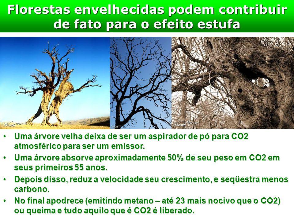 Florestas envelhecidas podem contribuir de fato para o efeito estufa Uma árvore velha deixa de ser um aspirador de pó para CO2 atmosférico para ser um