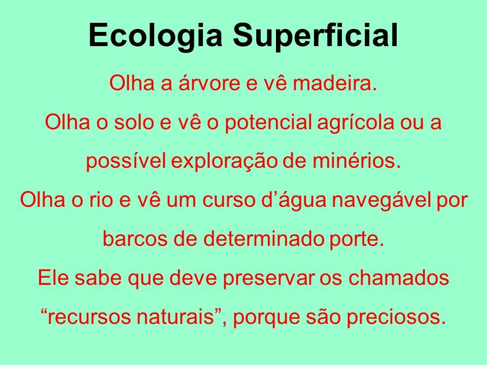 Ecologia Superficial Olha a árvore e vê madeira. Olha o solo e vê o potencial agrícola ou a possível exploração de minérios. Olha o rio e vê um curso