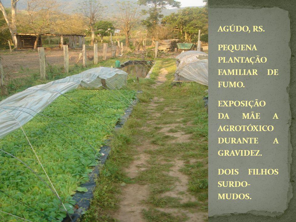 AGÚDO, RS. PEQUENA PLANTAÇÃO FAMILIAR DE FUMO. EXPOSIÇÃO DA MÃE A AGROTÓXICO DURANTE A GRAVIDEZ. DOIS FILHOS SURDO- MUDOS.