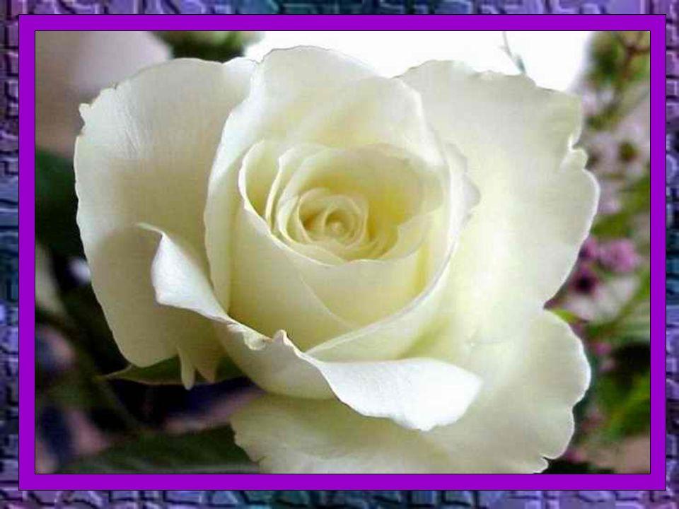 Deus – diz o livro da Sabedoria – não é o autor da morte, nem se alegra com a perdição dos vivos (1,13) A morte corporal é uma passagem à verdadeira v