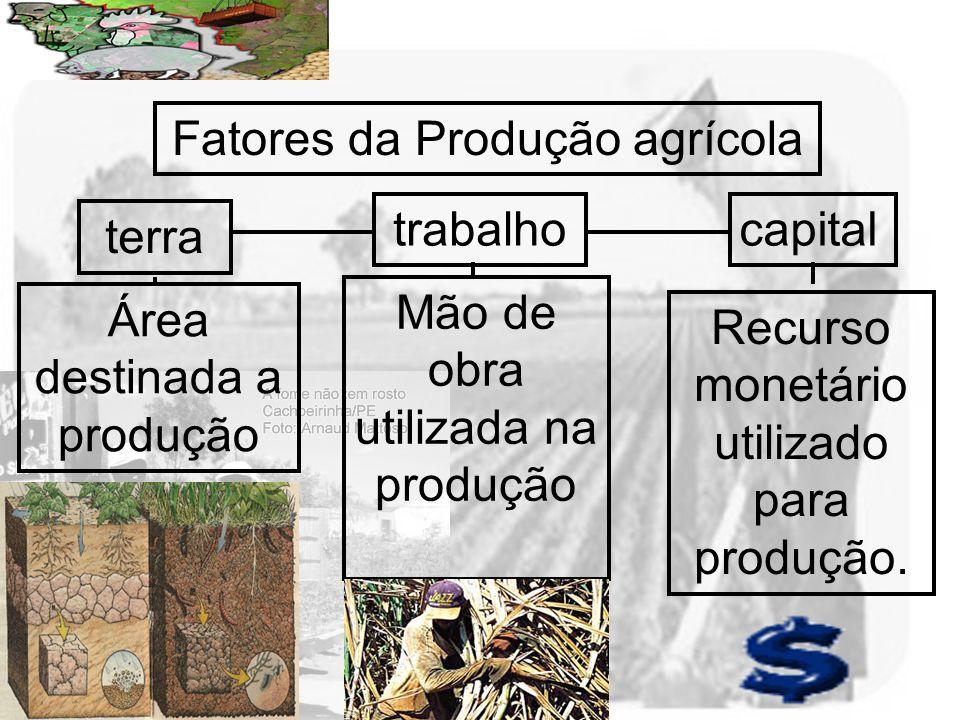 Prof. Wilton Oliveira Fatores da Produção agrícola terra trabalhocapital Área destinada a produção Mão de obra utilizada na produção Recurso monetário