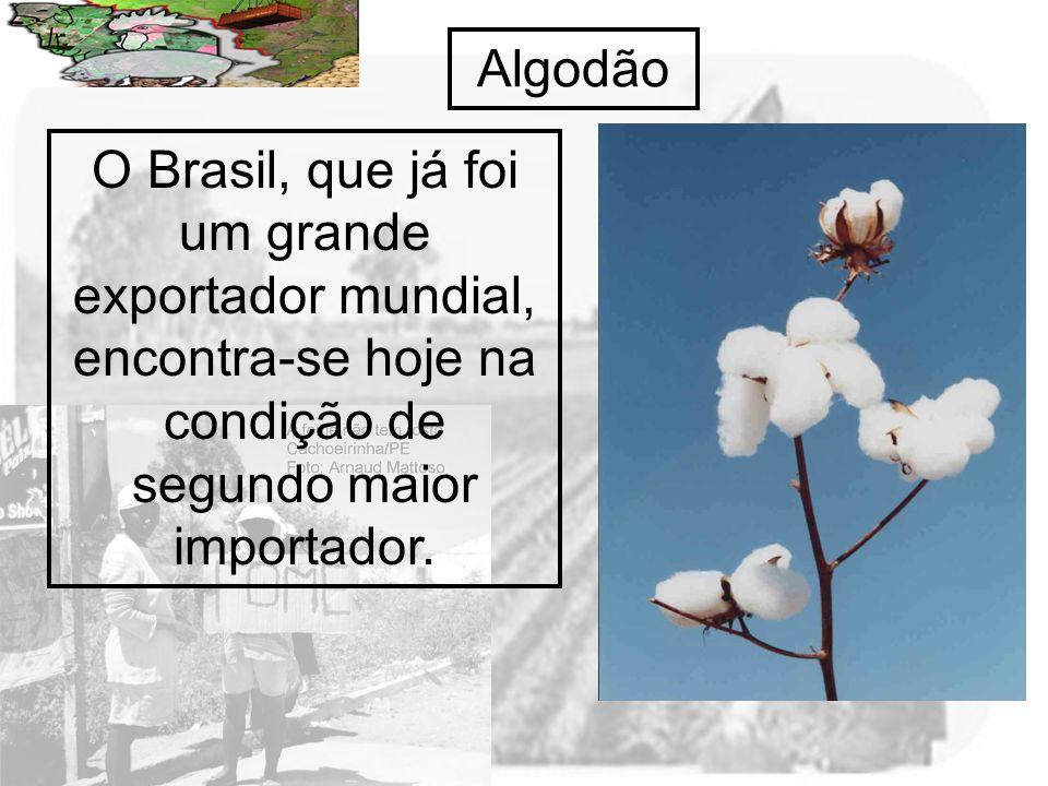Prof. Wilton Oliveira Algodão O Brasil, que já foi um grande exportador mundial, encontra-se hoje na condição de segundo maior importador.
