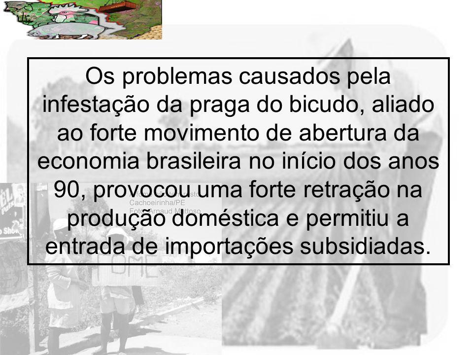 Prof. Wilton Oliveira Os problemas causados pela infestação da praga do bicudo, aliado ao forte movimento de abertura da economia brasileira no início