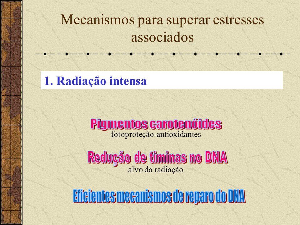 Mecanismos para superar estresses associados fotoproteção-antioxidantes 1. Radiação intensa alvo da radiação