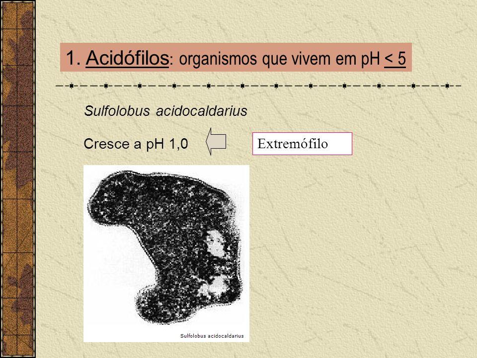 1. Acidófilos : organismos que vivem em pH < 5 Sulfolobus acidocaldarius Cresce a pH 1,0 Extremófilo