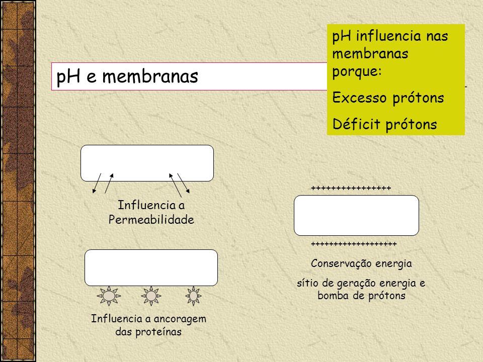 pH e membranas pH influencia nas membranas porque: Excesso prótons Déficit prótons Influencia a Permeabilidade Influencia a ancoragem das proteínas ++