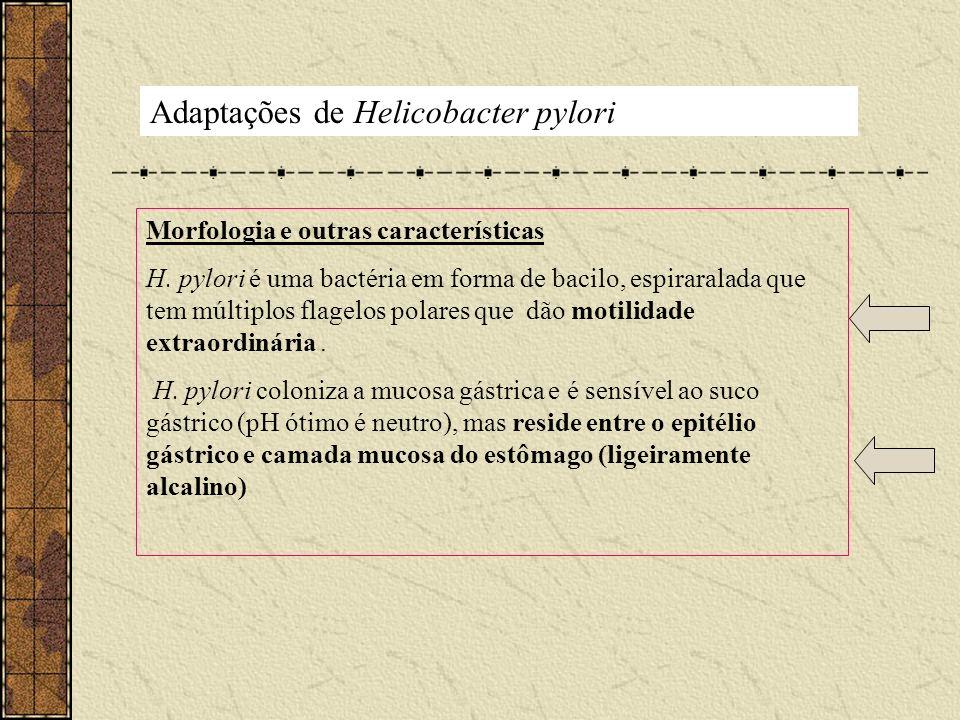 Adaptações de Helicobacter pylori Morfologia e outras características H. pylori é uma bactéria em forma de bacilo, espiraralada que tem múltiplos flag