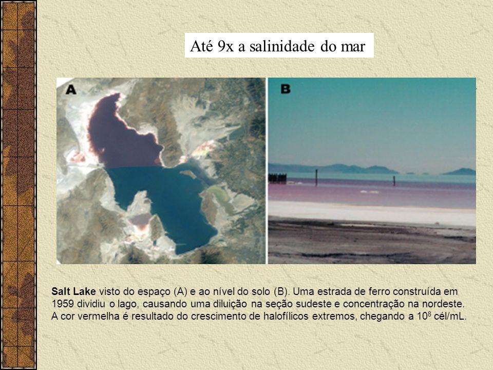 Até 9x a salinidade do mar Salt Lake visto do espaço (A) e ao nível do solo (B). Uma estrada de ferro construída em 1959 dividiu o lago, causando uma