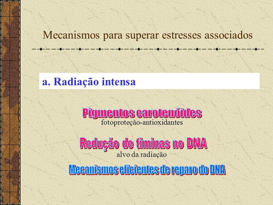 Mecanismos para superar estresses associados fotoproteção-antioxidantes a. Radiação intensa alvo da radiação