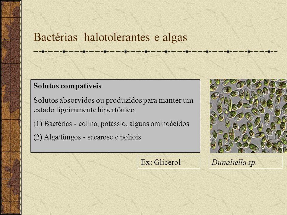 Bactérias halotolerantes e algas Ex: GlicerolDunaliella sp. Solutos compatíveis Solutos absorvidos ou produzidos para manter um estado ligeiramente hi