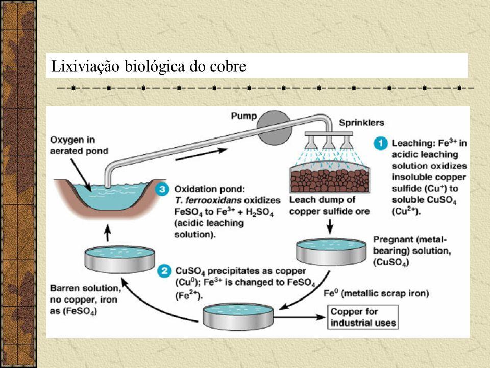 Lixiviação biológica do cobre