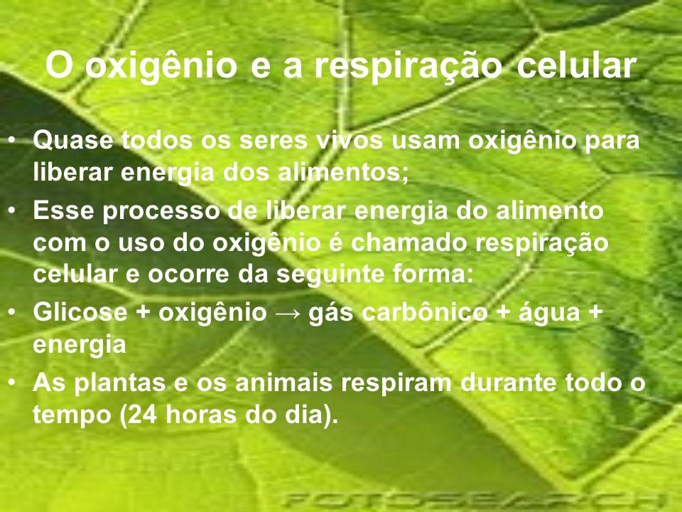 O oxigênio e a respiração celular Quase todos os seres vivos usam oxigênio para liberar energia dos alimentos; Esse processo de liberar energia do ali