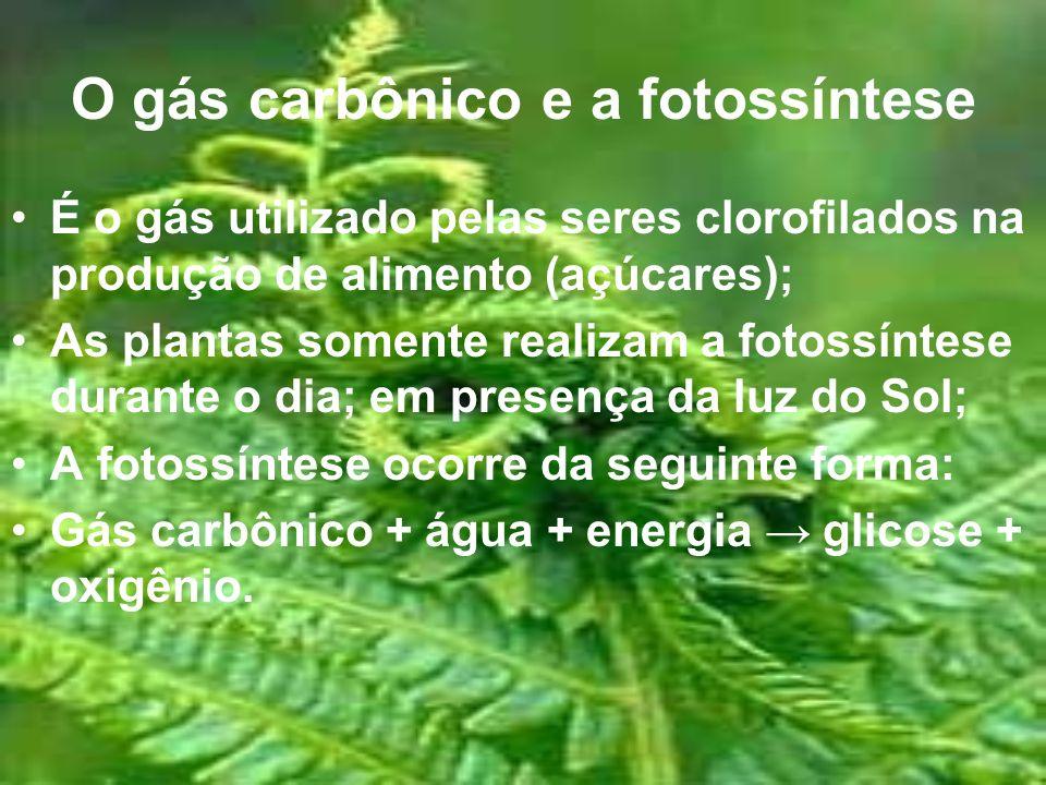 O gás carbônico e a fotossíntese É o gás utilizado pelas seres clorofilados na produção de alimento (açúcares); As plantas somente realizam a fotossín