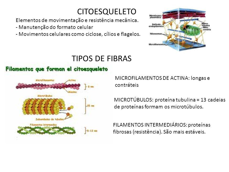 CITOESQUELETO Elementos de movimentação e resistência mecânica. - Manutenção do formato celular - Movimentos celulares como ciclose, cílios e flagelos