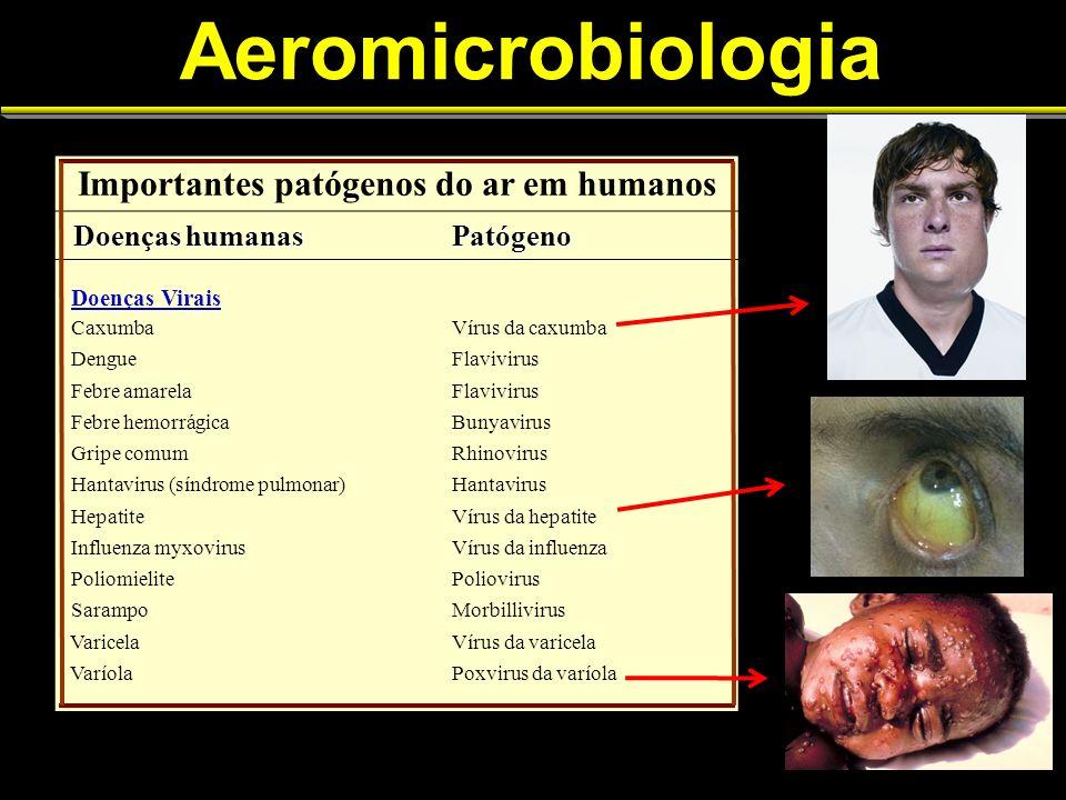 Aeromicrobiologia Importantes patógenos do ar em humanos Doenças humanas Doenças humanasPatógeno Doenças Virais CaxumbaVírus da caxumba DengueFlavivir