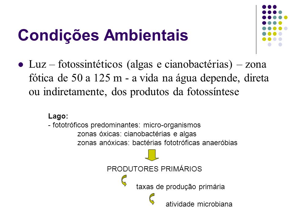Condições Ambientais Luz – fotossintéticos (algas e cianobactérias) – zona fótica de 50 a 125 m - a vida na água depende, direta ou indiretamente, dos