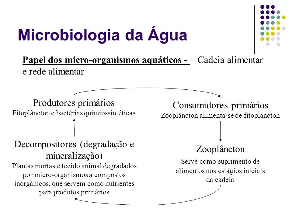 Microbiologia da Água Papel dos micro-organismos aquáticos - Cadeia alimentar e rede alimentar Produtores primários Fitoplâncton e bactérias quimiossi