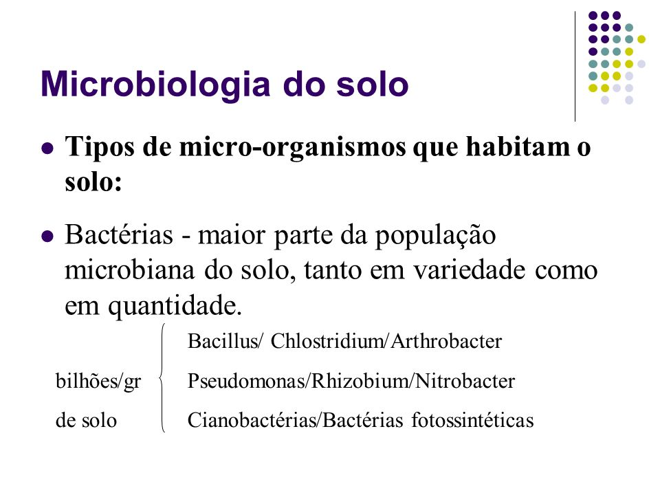 Bacillus/ Chlostridium/Arthrobacter bilhões/gr Pseudomonas/Rhizobium/Nitrobacter de solo Cianobactérias/Bactérias fotossintéticas Microbiologia do sol