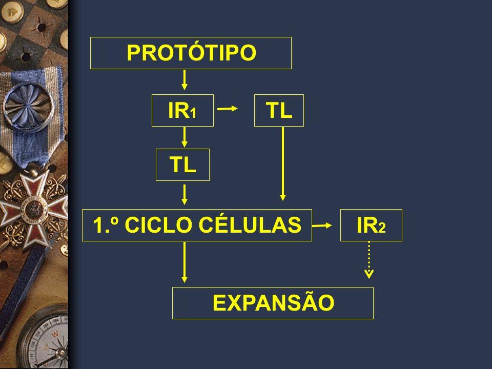 EXPANSÃO CICLOS DE MULTIPLICAÇÃO u Introdução dos demais sistemas de apoio (Ex. treinamentos, finais de semana) u Introdução dos níveis de acompanhame
