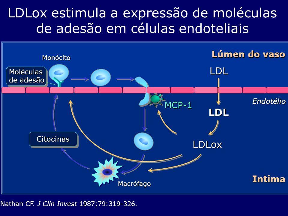 LDL LDL LDLox estimula a expressão de moléculas de adesão em células endoteliais Nathan CF. J Clin Invest 1987;79:319-326. Endotélio Lúmen do vaso Mon