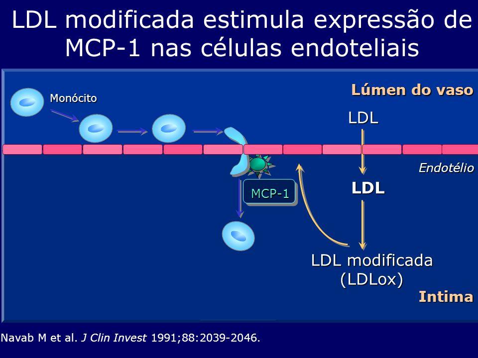 LDL LDL LDL modificada estimula expressão de MCP-1 nas células endoteliais Navab M et al. J Clin Invest 1991;88:2039-2046. Endotélio Lúmen do vaso Int