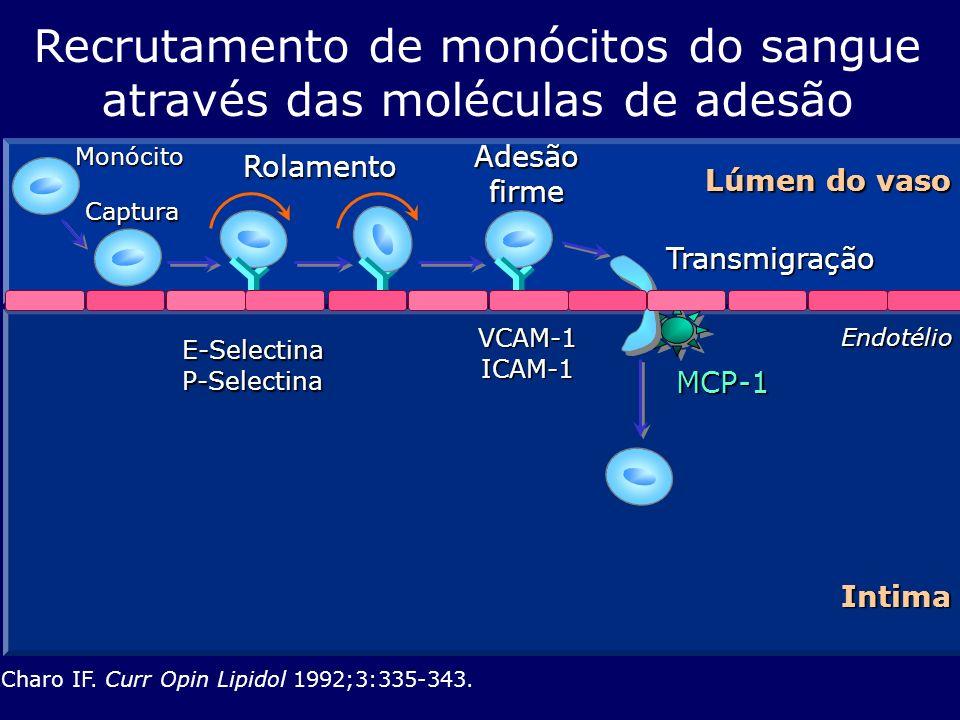 Endotélio Lúmen do vaso MCP-1 E-SelectinaP-Selectina Charo IF. Curr Opin Lipidol 1992;3:335-343. Recrutamento de monócitos do sangue através das moléc