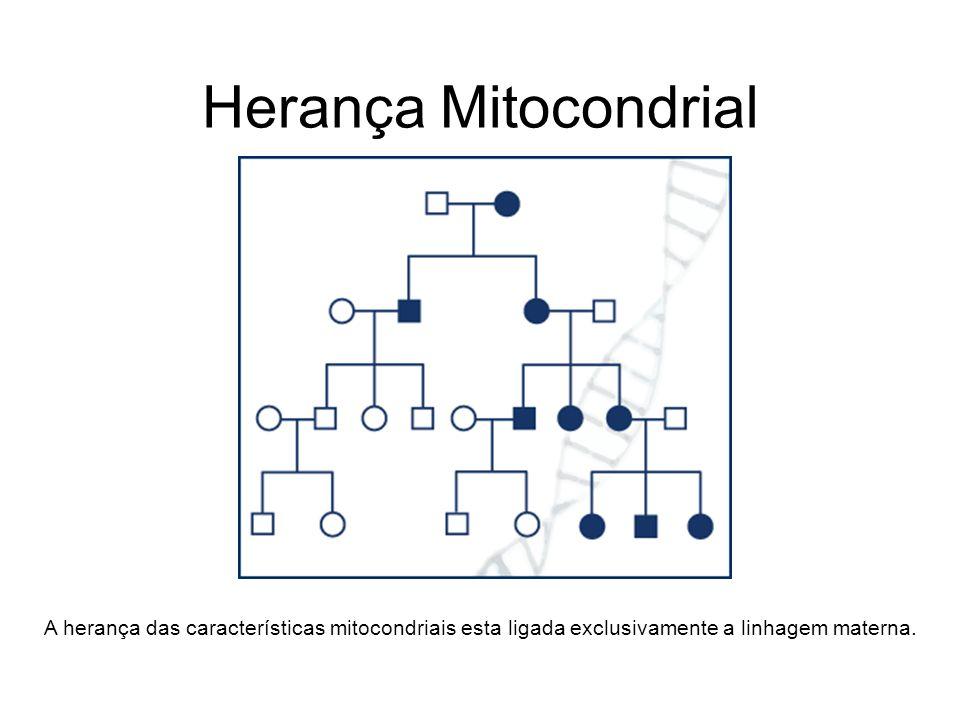 Herança Mitocondrial A herança das características mitocondriais esta ligada exclusivamente a linhagem materna.