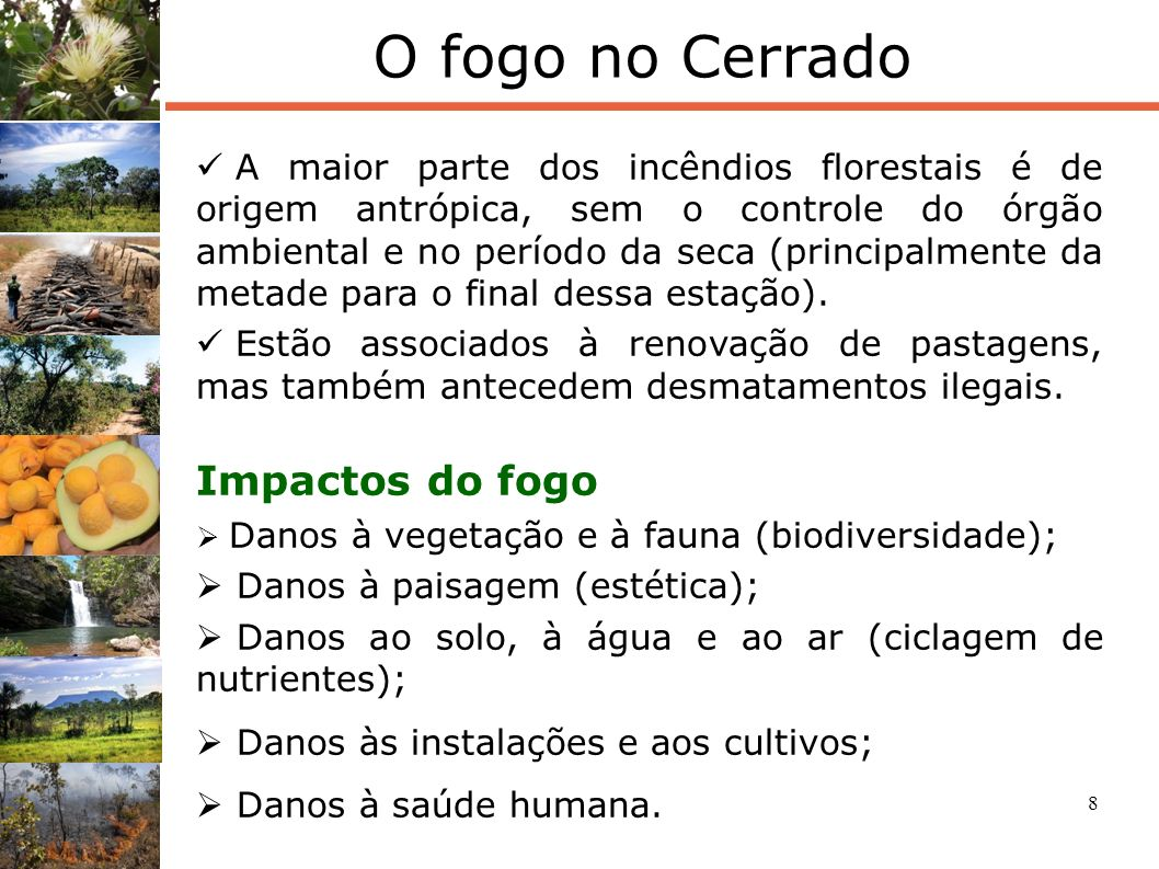 8 O fogo no Cerrado A maior parte dos incêndios florestais é de origem antrópica, sem o controle do órgão ambiental e no período da seca (principalmen