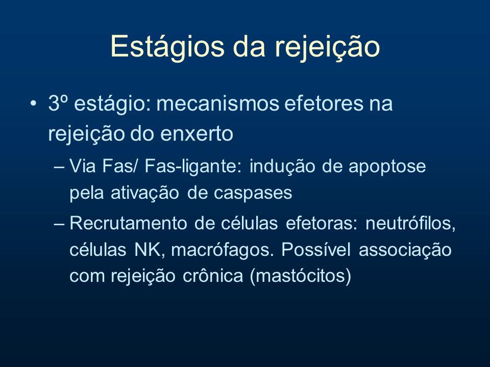Estágios da rejeição 3º estágio: mecanismos efetores na rejeição do enxerto –Via Fas/ Fas-ligante: indução de apoptose pela ativação de caspases –Recr