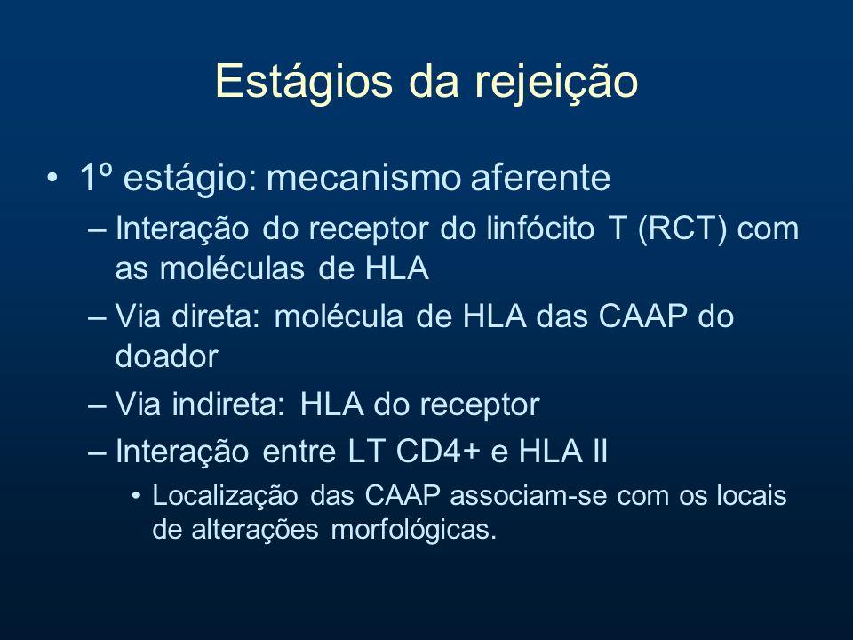 Estágios da rejeição 1º estágio: mecanismo aferente –Moléculas de adesão Adesão, migração e promoção de mecanismos efetores ICAM, LFA, VCAM, VLA –Moléculas de co-estimulação Fundamentais para a ativação completa dos linfócitos T CD28 (LT) e CD80, CD86