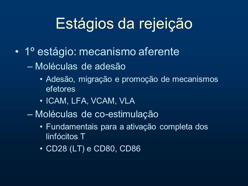Estágios da rejeição 1º estágio: mecanismo aferente –Moléculas de adesão Adesão, migração e promoção de mecanismos efetores ICAM, LFA, VCAM, VLA –Molé