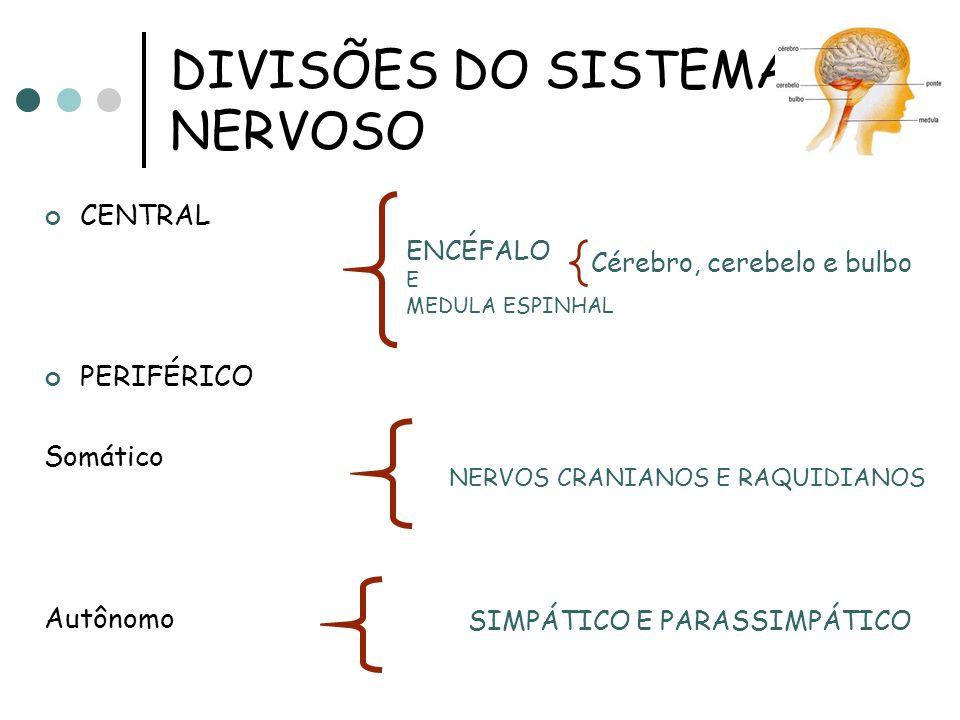 DIVISÕES DO SISTEMA NERVOSO CENTRAL PERIFÉRICO Somático Autônomo ENCÉFALO E MEDULA ESPINHAL NERVOS CRANIANOS E RAQUIDIANOS SIMPÁTICO E PARASSIMPÁTICO Cérebro, cerebelo e bulbo