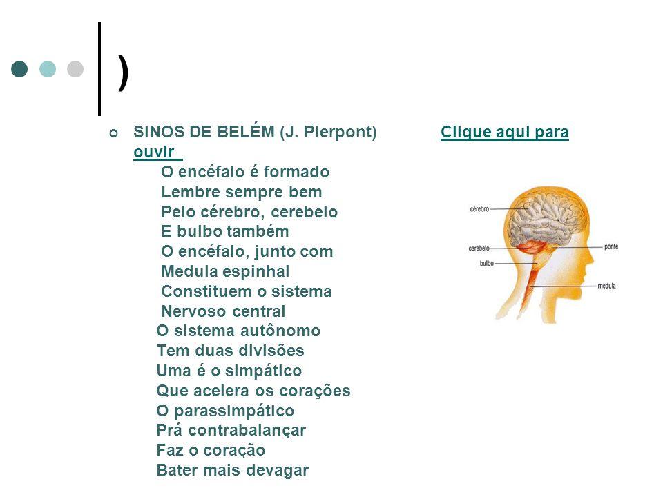 DIVISÕES DO SISTEMA NERVOSO CENTRAL PERIFÉRICO Somático Autônomo ENCÉFALO E MEDULA ESPINHAL NERVOS CRANIANOS E RAQUIDIANOS SIMPÁTICO E PARASSIMPÁTICO