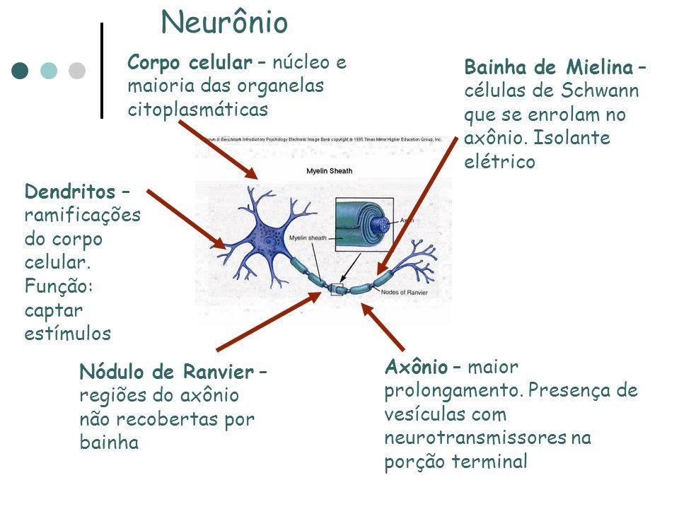 1. ÓSSEAS: Crânio e Coluna Vertebral 2. MEMBRANOSAS: As meninges( dura- máter, aracnóide e pia-máter) 3. LÍQUIDA: Líquido Cefalorraquidiano ou Líquor(