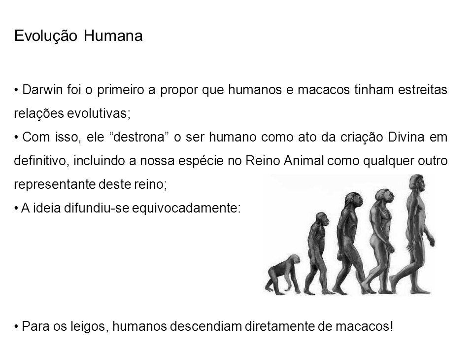 Evolução Humana Darwin foi o primeiro a propor que humanos e macacos tinham estreitas relações evolutivas; Com isso, ele destrona o ser humano como at