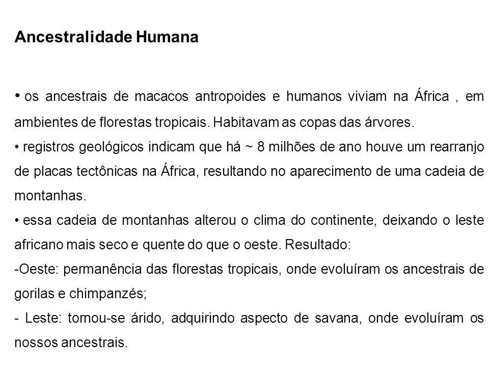 Ancestralidade Humana os ancestrais de macacos antropoides e humanos viviam na África, em ambientes de florestas tropicais. Habitavam as copas das árv