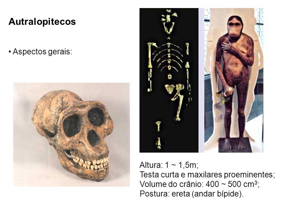 Autralopitecos Aspectos gerais: Altura: 1 ~ 1,5m; Testa curta e maxilares proeminentes; Volume do crânio: 400 ~ 500 cm 3 ; Postura: ereta (andar bípid