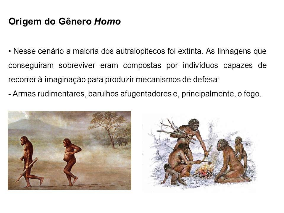 Origem do Gênero Homo Nesse cenário a maioria dos autralopitecos foi extinta. As linhagens que conseguiram sobreviver eram compostas por indivíduos ca