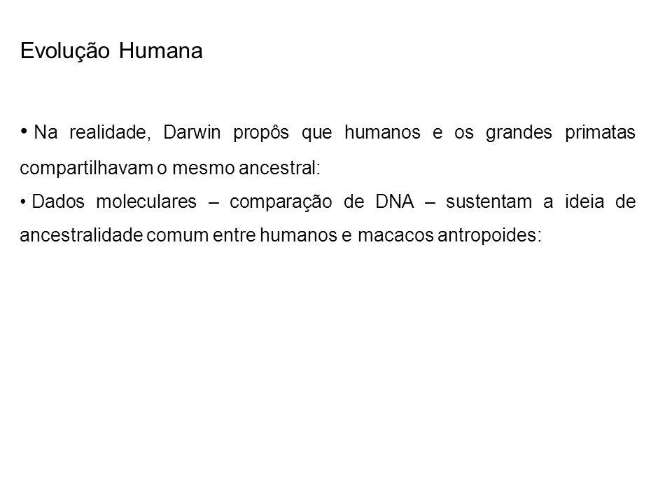 Evolução Humana Na realidade, Darwin propôs que humanos e os grandes primatas compartilhavam o mesmo ancestral: Dados moleculares – comparação de DNA