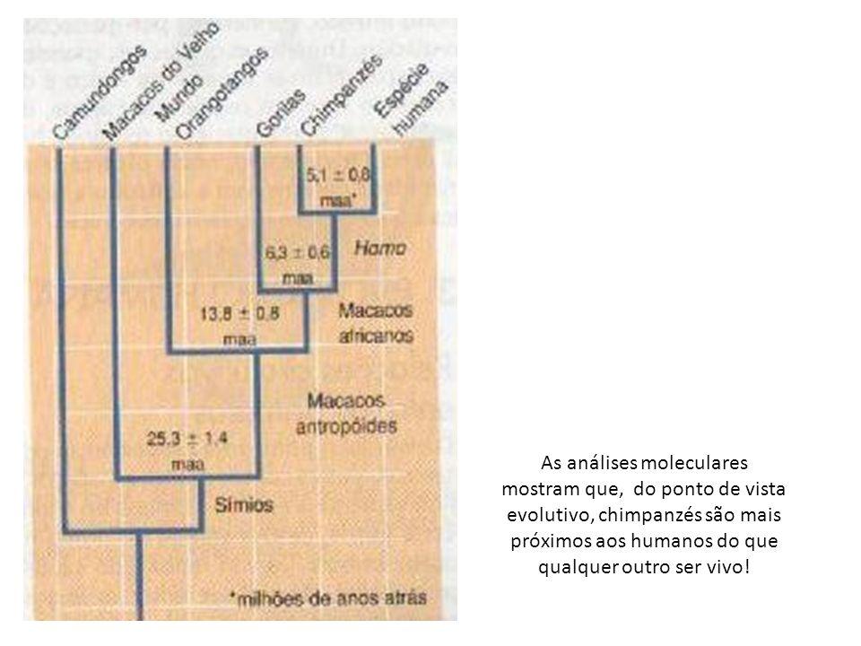 As análises moleculares mostram que, do ponto de vista evolutivo, chimpanzés são mais próximos aos humanos do que qualquer outro ser vivo!