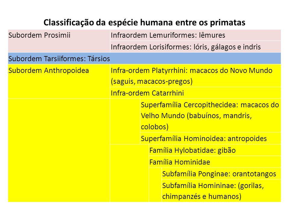 Classificação da espécie humana entre os primatas Subordem ProsimiiInfraordem Lemuriformes: lêmures Infraordem Lorisiformes: lóris, gálagos e indris S