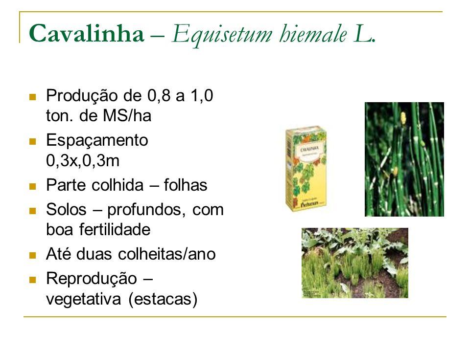 Produção de 0,8 a 1,0 ton. de MS/ha Espaçamento 0,3x,0,3m Parte colhida – folhas Solos – profundos, com boa fertilidade Até duas colheitas/ano Reprodu