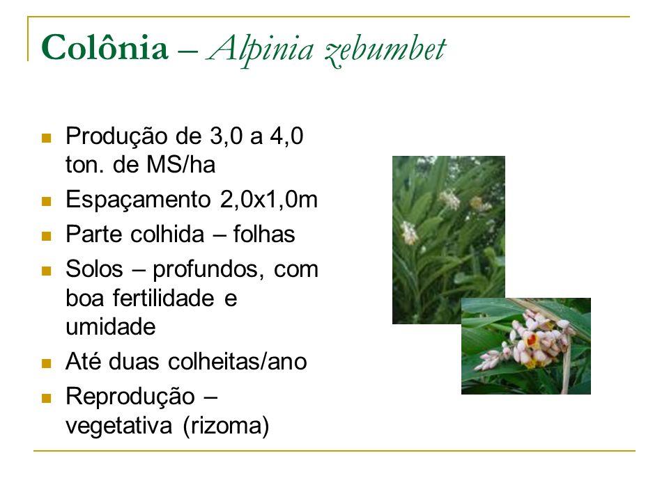 Produção de 3,0 a 4,0 ton. de MS/ha Espaçamento 2,0x1,0m Parte colhida – folhas Solos – profundos, com boa fertilidade e umidade Até duas colheitas/an