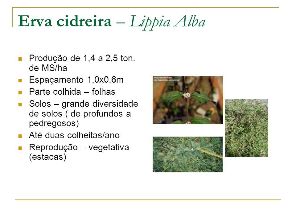 Produção de 1,4 a 2,5 ton. de MS/ha Espaçamento 1,0x0,6m Parte colhida – folhas Solos – grande diversidade de solos ( de profundos a pedregosos) Até d