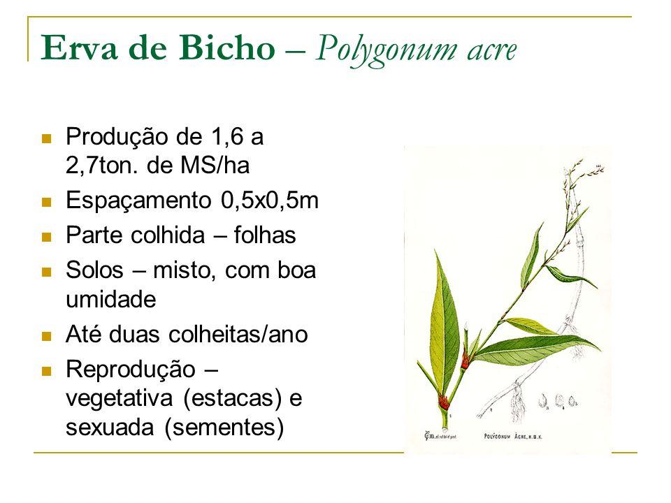 Produção de 1,6 a 2,7ton. de MS/ha Espaçamento 0,5x0,5m Parte colhida – folhas Solos – misto, com boa umidade Até duas colheitas/ano Reprodução – vege