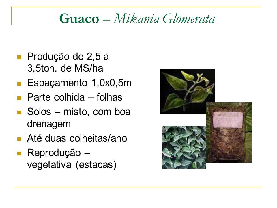 Produção de 2,5 a 3,5ton. de MS/ha Espaçamento 1,0x0,5m Parte colhida – folhas Solos – misto, com boa drenagem Até duas colheitas/ano Reprodução – veg