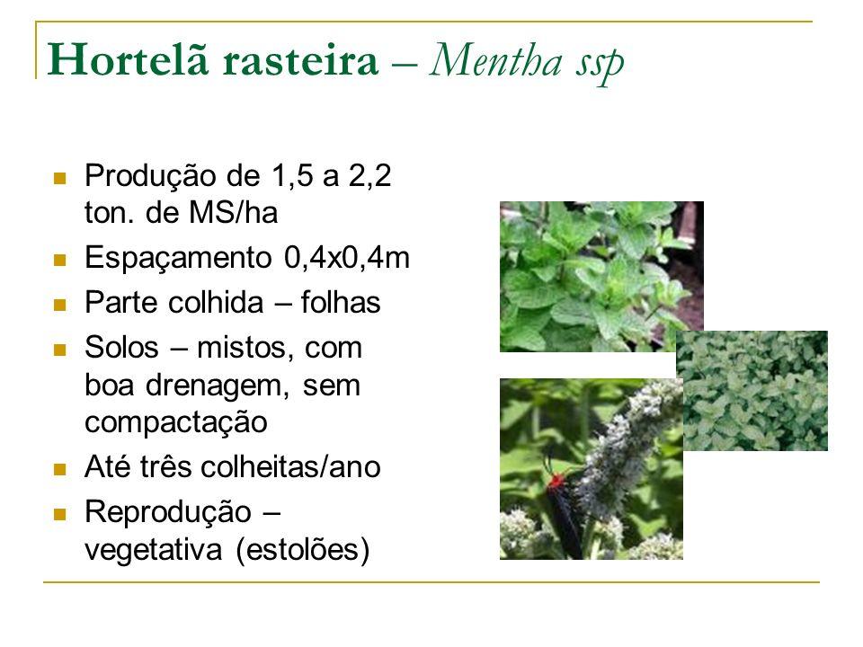Produção de 1,5 a 2,2 ton. de MS/ha Espaçamento 0,4x0,4m Parte colhida – folhas Solos – mistos, com boa drenagem, sem compactação Até três colheitas/a
